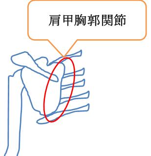 肩甲胸郭関節の図