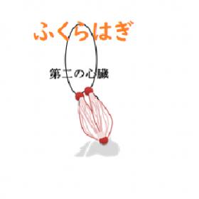 腓腹筋の絵