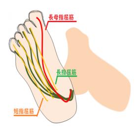 足底の筋肉の図