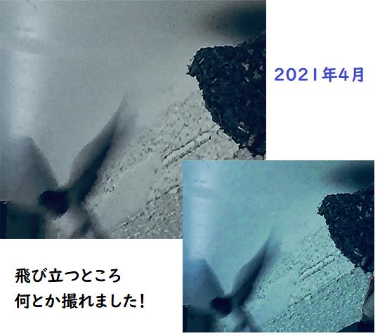 燕の飛び立つ写真