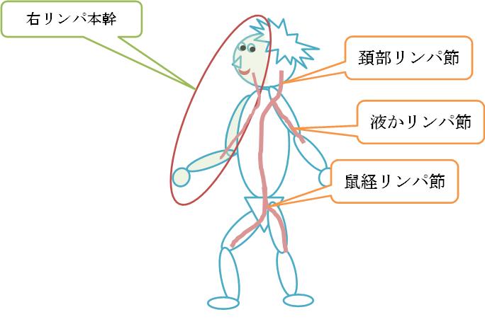 リンパの流れの図