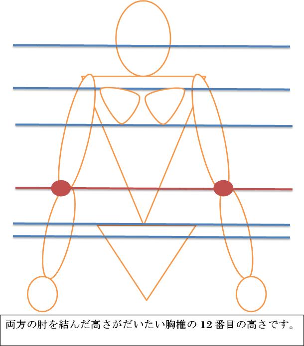 骨の位置の図
