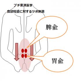 脾兪と胃兪のツボ