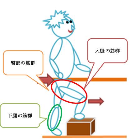 足の筋肉の説明