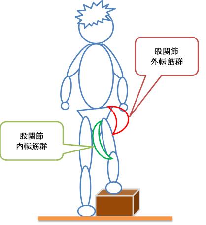 後方の筋肉の図