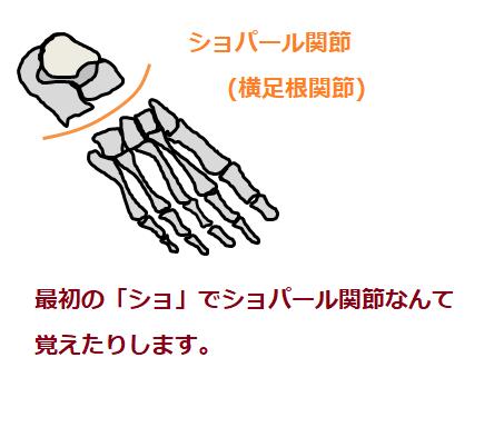 ショパール関節の図