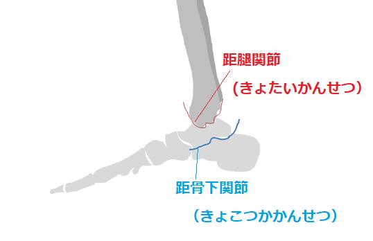 距骨の関節の図