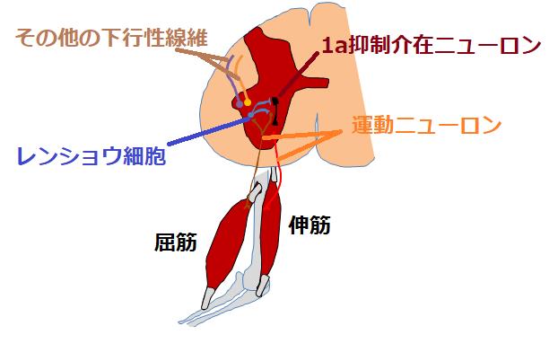 ワンエー抑制の図